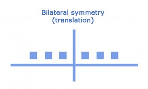 visual representation of bilateral symmetry